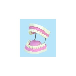 Plastic Display Teeth